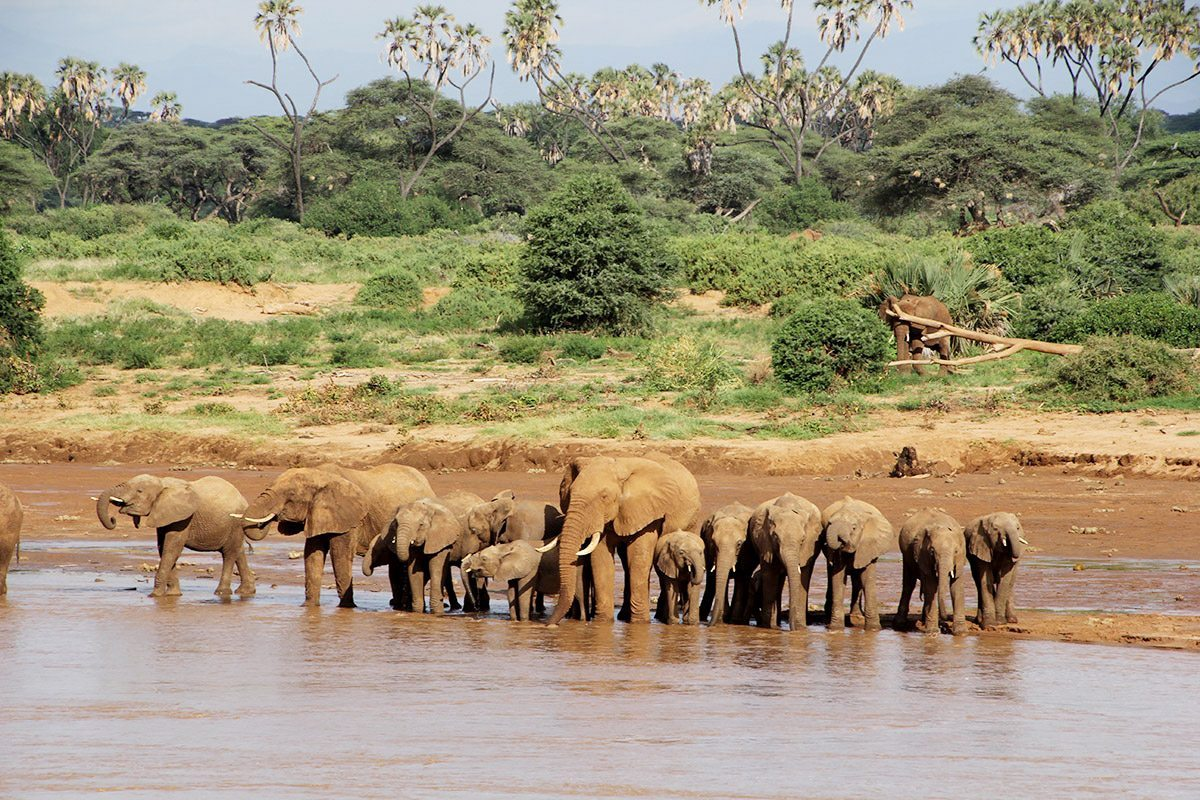 kenya wildlife We booked our safari 6 months before our trip to kenya and found antony to be helpful with suggestions and modifications to the pole-pole safari itinerary we were a family of 5, and found the safari vans to be comfortable and well maintained.